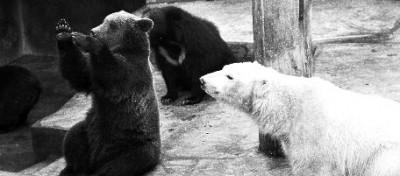 Una specie di orso