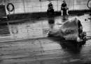 Australia e Giappone in guerra per le balene