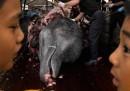 Le tangenti del Giappone per la caccia alle balene