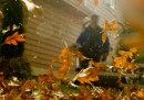 Armi di distruzione di foglie