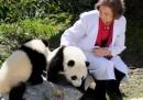 Panda o Spagna