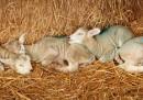 La famiglia agnelli