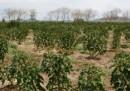 Il business dei biocarburanti in Africa
