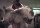 L'esperimento del gatto imburrato