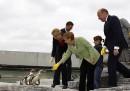 Angela Merkel, orche, balene, pinguini