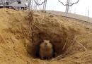 Lo scoiattolo del cosmodromo di Baikonur