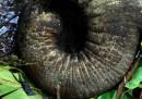 Il contrabbando di avorio in Africa