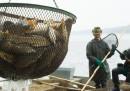 Le polemiche sul nuovo fondo europeo per la pesca
