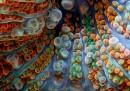15 fantastiche foto di coralli