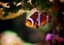 Foto macro coralli - Felix Salazar