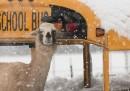 Un'anomala tempesta di neve negli Stati Uniti