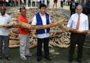 Le zanne di elefante distrutte nelle Filippine