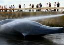 L'Australia contro il Giappone per la caccia alle balene