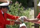 Il censimento dei cigni del Tamigi - foto