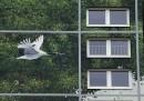 Murale Berlino