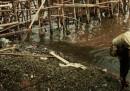 Le foto della raccolta delle cozze nella baia di Giacarta