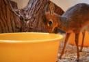 È nata un'antilope – foto