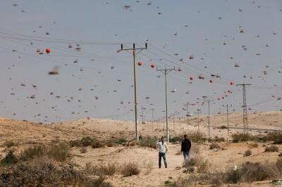 Locuste nel Neghev