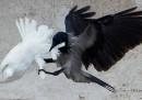 Perché le colombe del Papa sono state attaccate