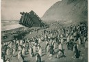 Pinguini e relitti