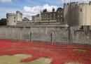 La guerra e i mille papaveri rossi