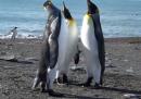 Cronaca pinguina