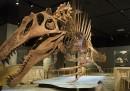 La riscoperta dello Spinosauro