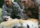 La tigre di Putin è scappata in Cina