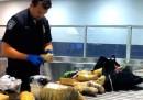 Gli alimenti confiscati all'aeroporto di New York