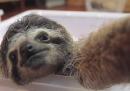 Come un bradipo si farebbe un selfie