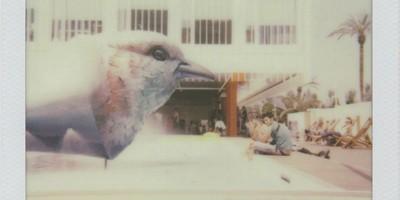 Polaroid da Expo