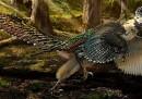 Il più grande dinosauro alato mai scoperto