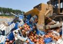 Il cibo europeo distrutto in Russia