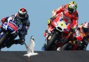 La testata di Andrea Iannone a un gabbiano durante il GP di Australia