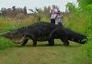 Questo enorme alligatore non è nemmeno il più grande