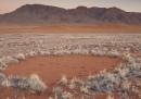 """Abbiamo risolto il mistero dei """"cerchi delle fate"""" in Namibia?"""