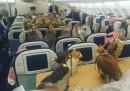 Ottanta falchi su un aereo di linea