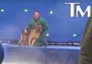 Il video del cane che viene costretto a nuotare è stato manipolato
