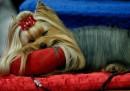 Foto di cani conciati per un concorso
