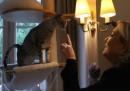 Marine Le Pen vuole farci tenerezza con i gattini
