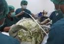 Hanno tolto 915 monetine dalla pancia di una tartaruga