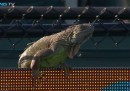 Una partita di tennis interrotta da un'iguana