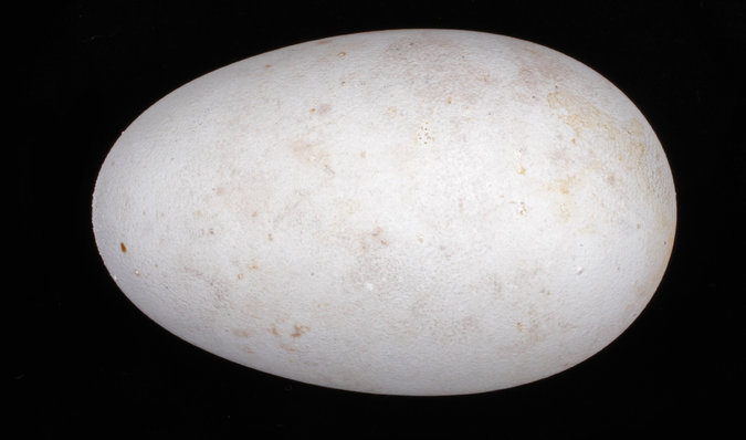 uovo2