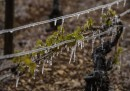 La produzione di vino francese nel 2017 potrebbe diventare la più bassa dal 1991, almeno