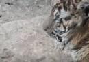 Gli animali dello zoo di Aleppo sono stati messi in salvo in Turchia