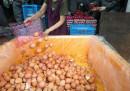 Alcuni campioni di uova contaminate dal fipronil sono stati trovati in Italia