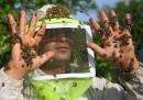 Ci sono buone notizie per le api
