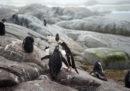 Migliaia di pulcini di pinguino sono stati trovati morti su un'isola in Antartide