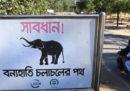 Quattro rifugiati rohingya sono morti calpestati da un elefante in un campo profughi