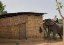 In India la polizia usa gli elefanti per demolire le case